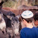 פעילות לכל המשפחה באזור בית שאן והסחנה